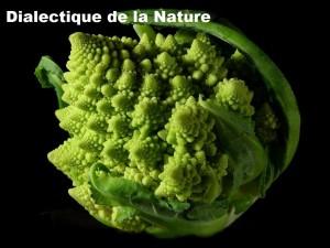 Dialectique hégélienne et dialectique matérialiste –  Le concept de dialectique de la nature