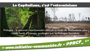 Pologne : le pouvoir réactionnaire détruit la forêt de Bialowieza, plus vieille forêt d'Europe, protégée par la Pologne Socialiste