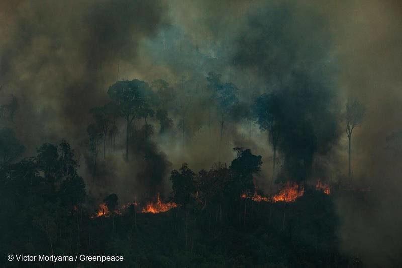 Exterminisme : le Capitalisme brûle l'Amazonie et menace l'Humanité !