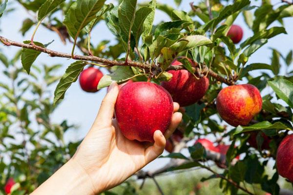 Le parti communiste d'Australie dénonce l' hyper exploitation de la jeunesse dans le secteur agricole …